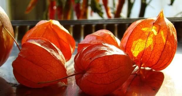 Фрукты со вкусом лета: экзотика, доступная в городе