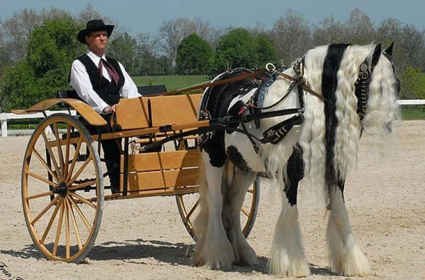 Цыганская упряжная: Очередное доказательство, что цыгане превосходно разбираются в лошадях