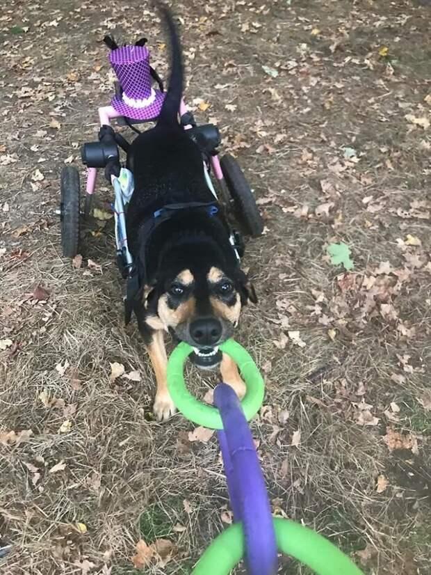 Женщина приютила шесть собак-инвалидов, подарив им море счастья и лучшую жизнь