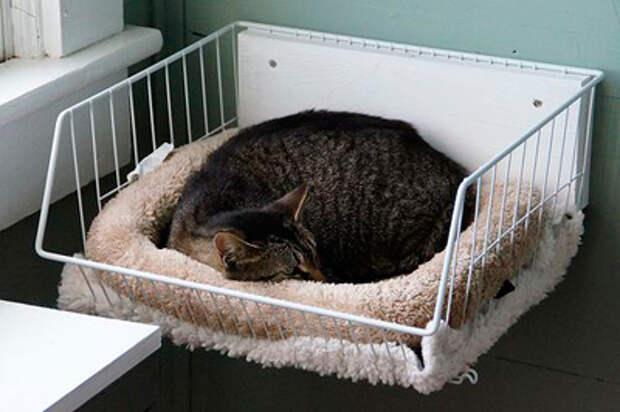 Кот и его среда обитания