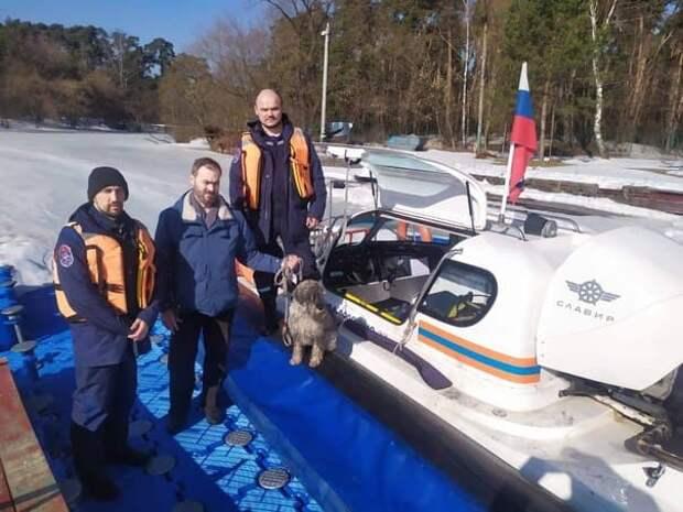 В Серебряном Бору спасли провалившуюся под лёд собаку