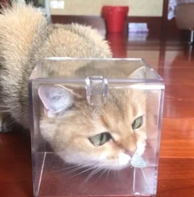 Милое и смешное видео знакомства кошки с бабочкой