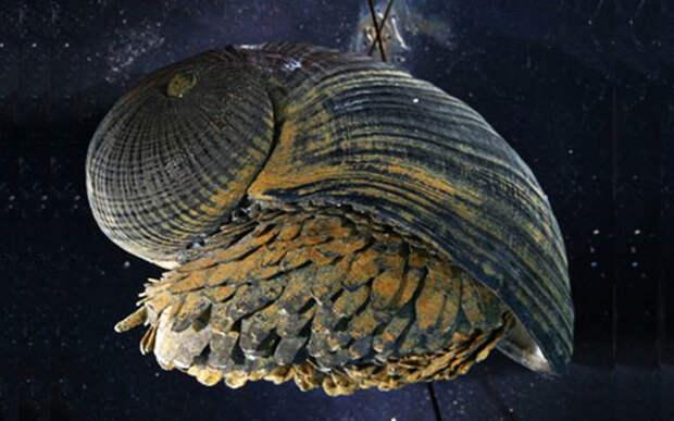 10 самых странных морских моллюсков