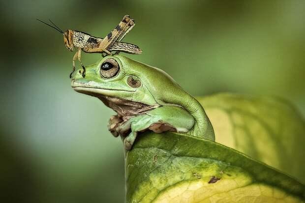 Frogs03 Оригинальные лягушки