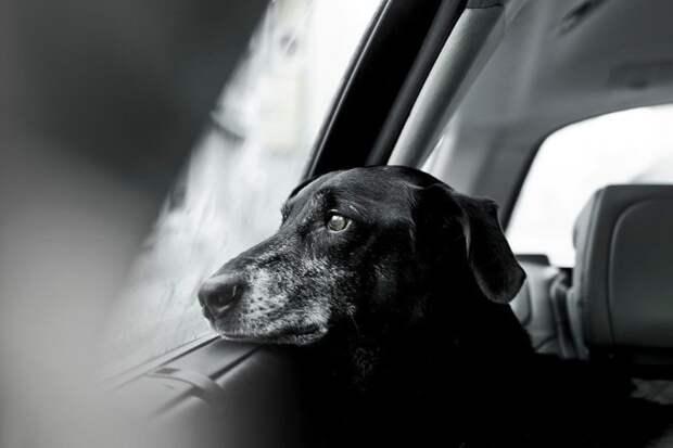 Второе место в категории «Старички» великобритания, животные, интересное, конкурс, собака, собаки