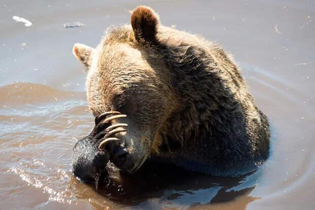 Рыбаки обнаружили вреке медведя сбанкой наголове — ирешили рискнуть