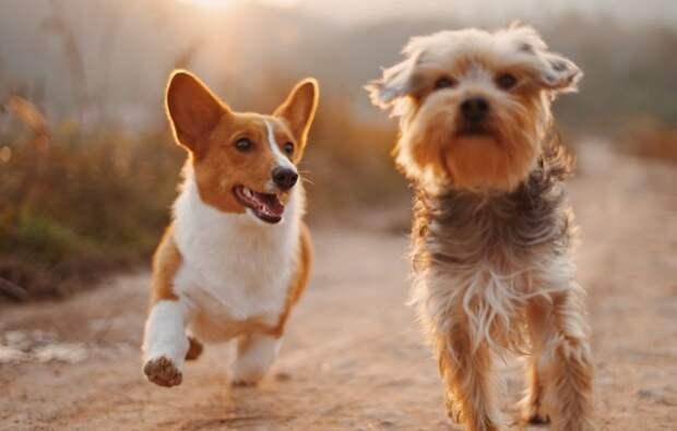 Собаки используют для навигации магнитное поле Земли