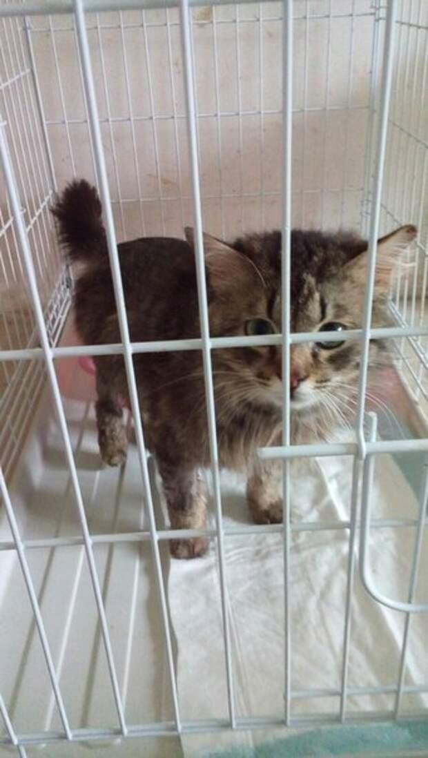 Котик начал истошно мяукать, когда люди остановились, чтобы рассмотреть его истории спасения, кот, кошка, приют