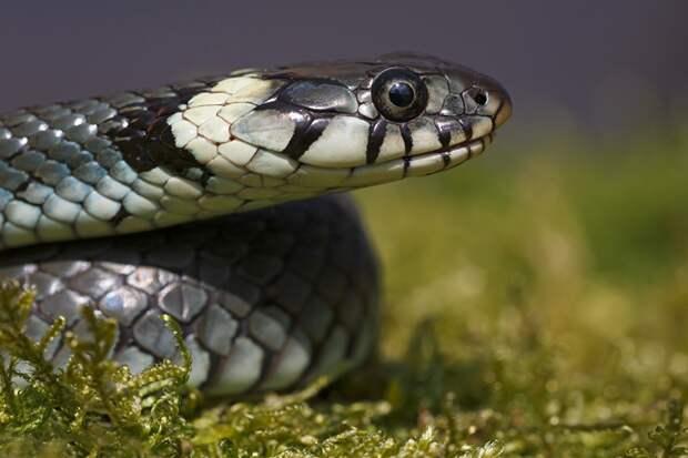 Змея во вратарской «Ахмата». Ползучий гад  для грозненцев стал символом неудачи в матче с «Сочи»