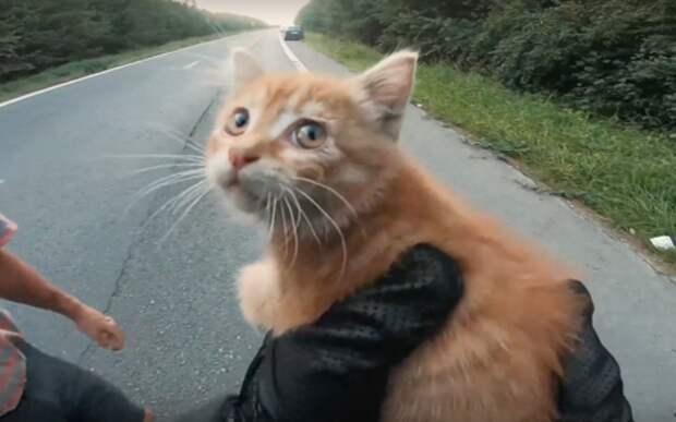 Какие глаза! — чудесное спасение котенка на дороге