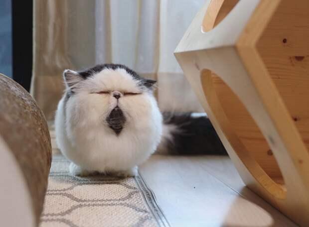 Томный котик по имени Зуу