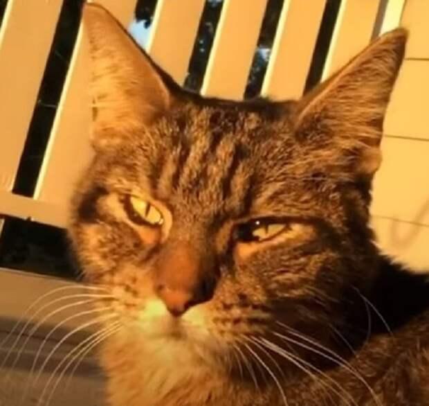 Ветеринар поставила кошке серьезный диагноз. Вот только зря она поспешила огорчить хозяев