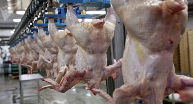 В Китае хотят получать из России кондиционные куриные лапы