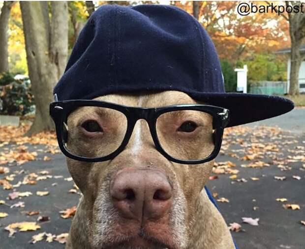 21 фото собак, которые напомнят вам друзей, родственников и соседей