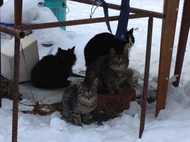Живодеры или спасители животных? Мертвые кошки под полом
