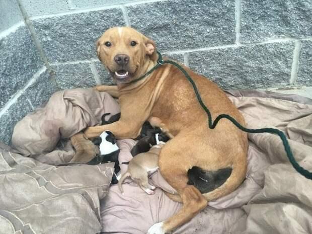 Она не бросила своих щенков, когда хозяева выбросили их на улицу животные, люди, собаки