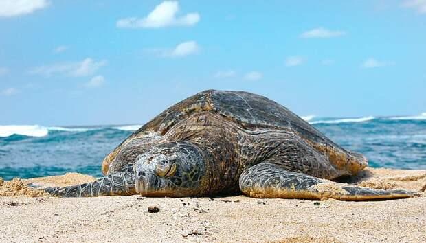 Как выбрать отель и пляж на Сейшелах: мастер класс от Coral Travel