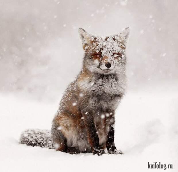 Животные зимой (45 фото)