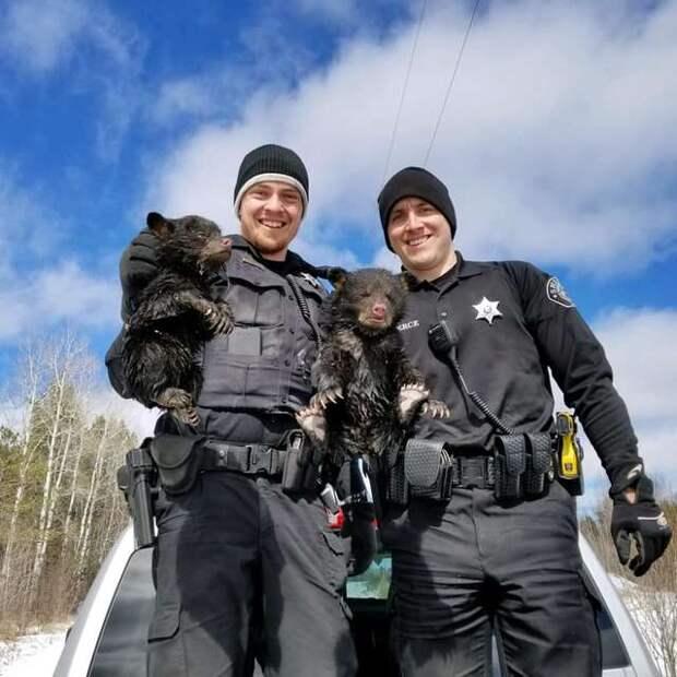 медвежата на руках