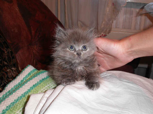 Почему же у меня поселился кот? Ведь я с детства неодобрительно отношусь к содержанию животных в городских квартирах