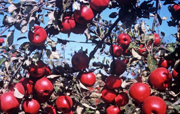 Красные овощи и фрукты снижают риск развития рака груди - ученые