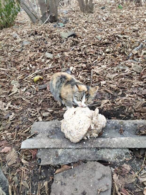 Пёс Артемон и коты глухого поселка или почему им нужно помогать