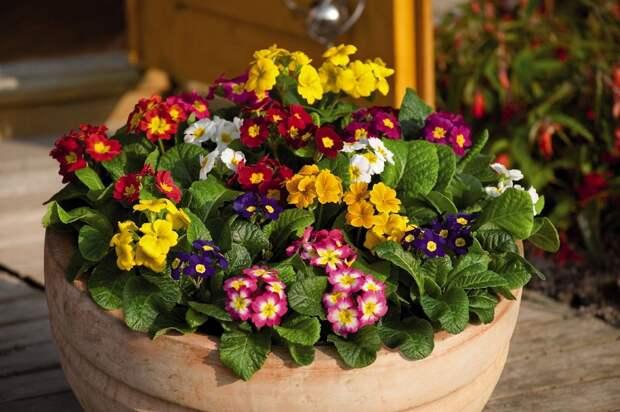 Уход за домашними растениями без хлопот: секреты знатоков
