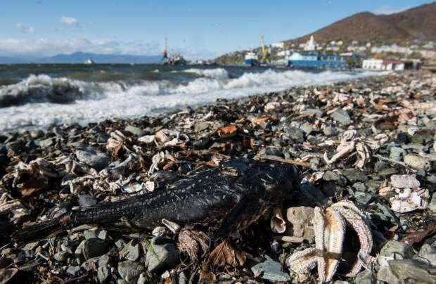 Ученые РАН назвали «красный прилив океана» причиной экологической катастрофы на Камчатке