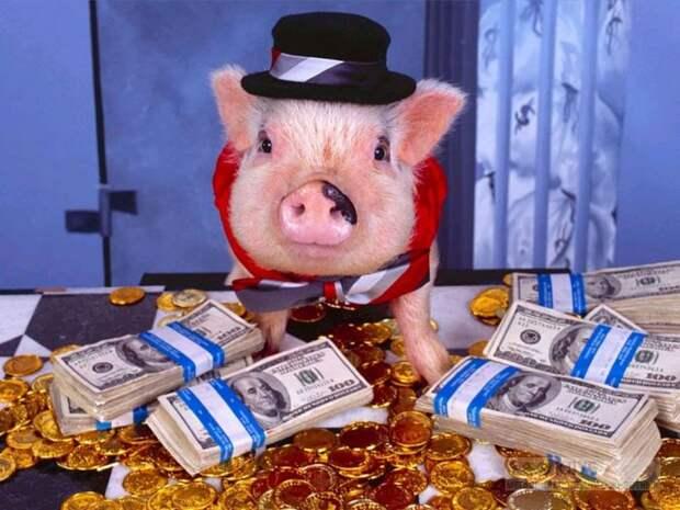 Смотри, эти богатые свиньи!