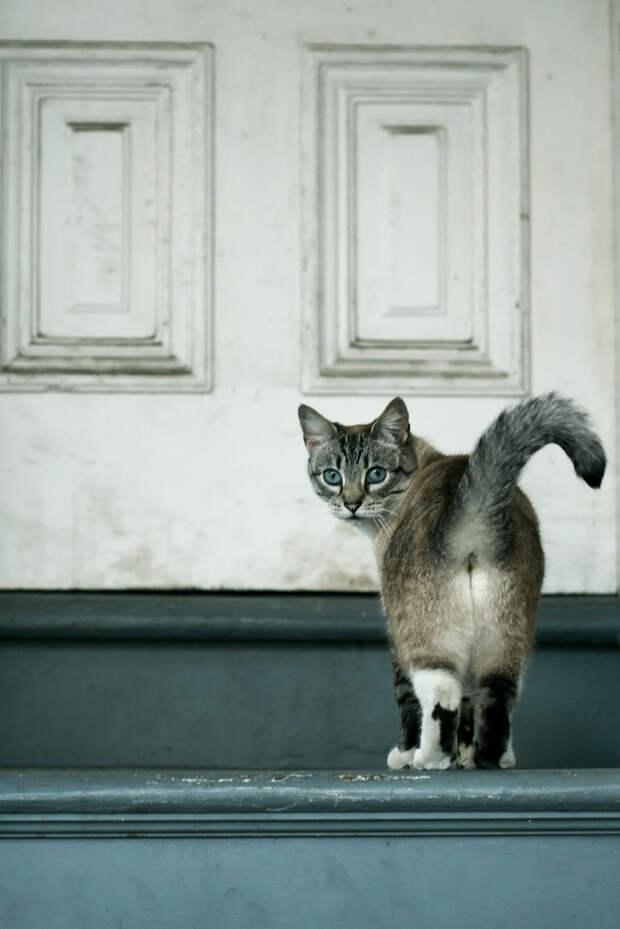 кошачья попа