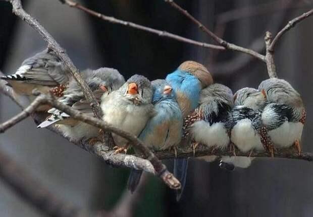 Забавные фотографии птиц