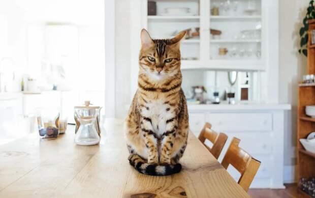 Зачем кошки скидывают вещи со всех поверхностей