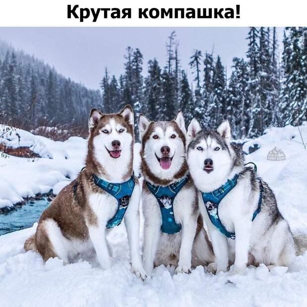 Подборка позитивных, классных и милых фотографий с надписями из сети