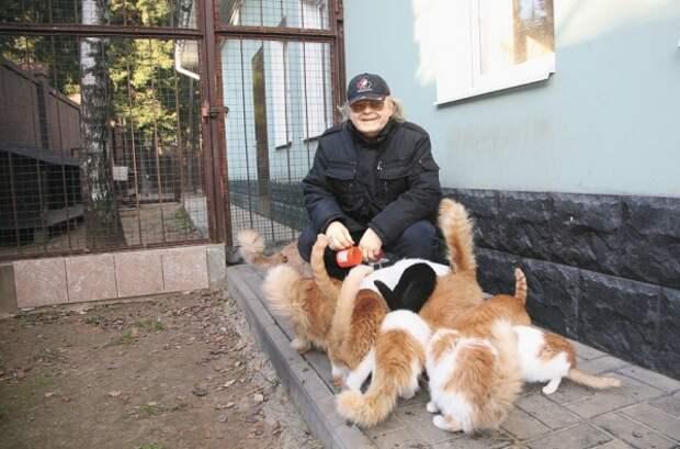 Юрий Антонов: У меня в доме живут больше 30 кошек
