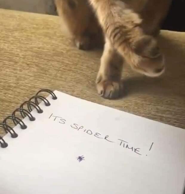 Котик, ну ты чего? МУРлыка спокойно наблюдал за хозяйкой, пока она не нарисовала маленького паучка