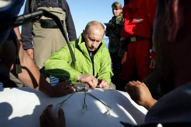 Президент РФ прикрепляет мачок к белуге Даше в ходе визита на остров Чкалова в 700 км к северо-востоку от Хабаровска, 31 июля 2009 года.
