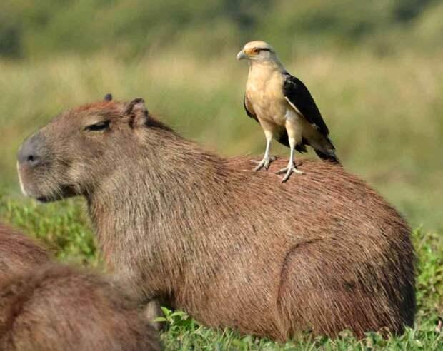Животные, которые выбрали необычное средство передвижения