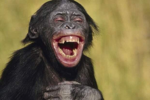 Шучу-шучу: есть ли у животных чувство юмора