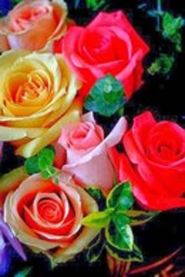 Как сохранить букет роз надолго? Читаем 5 золотых правил!