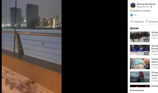 Заяц устроил забег на канале имени Москвы