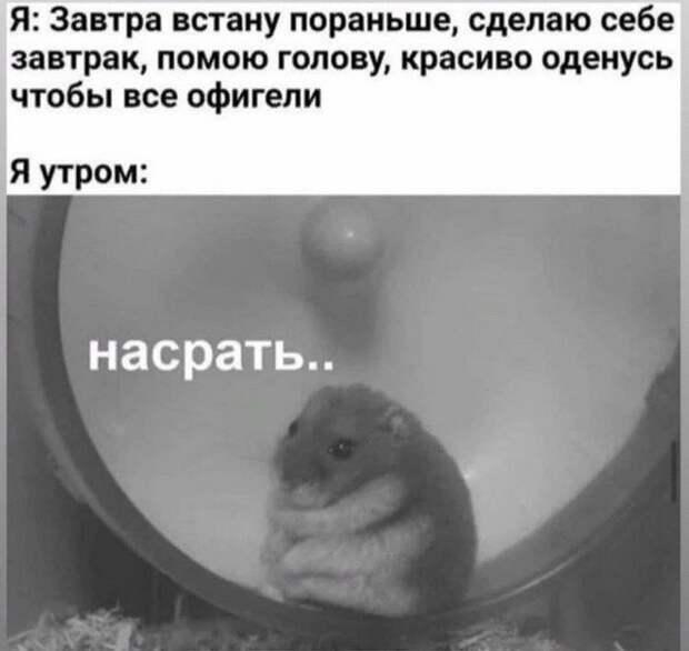 Лучшие мемы, истории и картинки из Сети