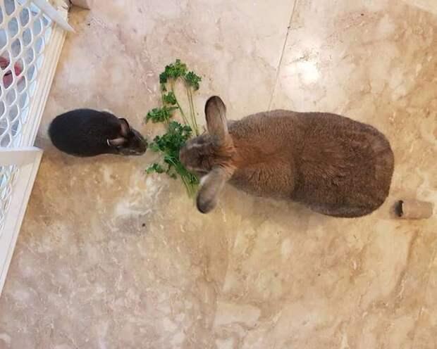Кролик влюбился в крольчиху в четыре раз больше него, и та ответила взаимностью