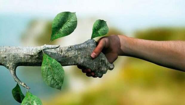 13 способов стать эко-френдли и сделать планету чище