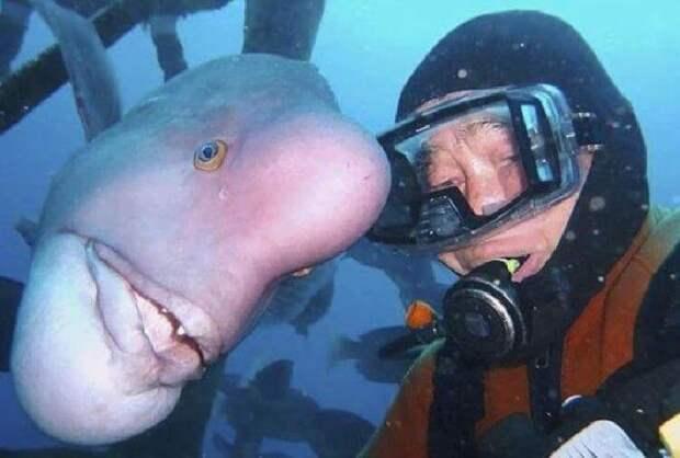 Вот уже 25 лет японский дайвер навещает своего лучшего друга