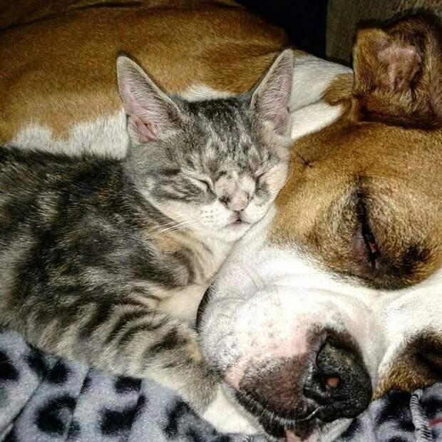Испуганные глазки, торчащий зубик… На ступеньках медпункта сидел котёнок и ловил своё Счастье!