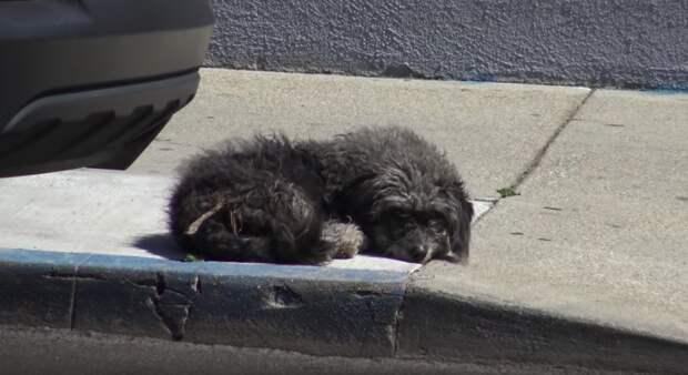 собака на тротуаре
