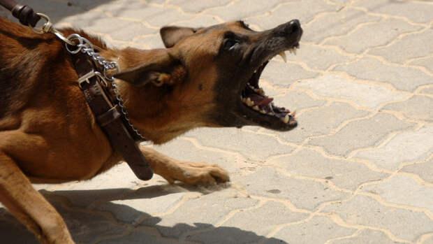 Собака с неадекватным поведением напала и покусала 11-летнего ребенка в Крыму
