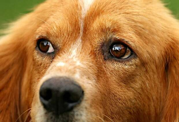 В Сочи полиция проверяет инцидент с ранением собаки