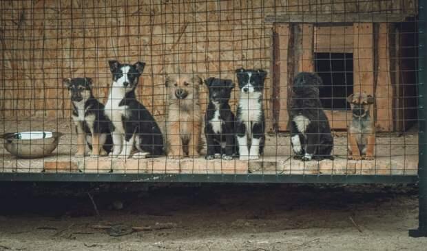 Настроительство приюта для бездомных животных вОренбурге выделят 3,6млн. рублей