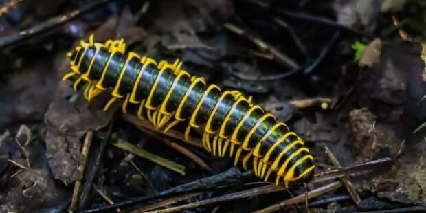 9 удивительных существ планеты Земля, обладающих суперспособностями